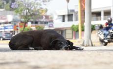 Abandonaron a 50 mascotas desde cuarentena por Covid-19; temor a contagios entre las causas