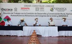 Acuerdan Murat y Senasica capacitación en sanidad e inocuidad para reactivar sector agropecuario