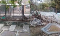 Roban 48 iguanas negras en peligro de extinción del Foro Ecológico en Juchitán