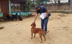 Durante 2020, Oaxaca de Juárez sancionó a 203 personas por maltrato animal