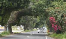 Plantar nuevos árboles no basta para mitigar daño por obra de símbolos Patrios, dicen ambientalistas