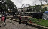 Buscará Fundación Harp Helú levantar segundo laurel centenario que cayó en el zócalo