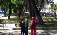 Entregan ambientalistas plan para arbolado en zócalo de Oaxaca; urgen capacitar funcionarios