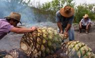 Mezcaleros de Oaxaca se disputan el Consejo Regulador del Mezcal en Oaxaca; interviene Secretaría de Economía