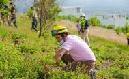 Reforestan 2 hectáreas en el Cerro del Crestón por el Día de la Riqueza Natural de Oaxaca