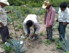 Productores de Oaxaca acusan al presidente del Consejo Regulador del Mezcal de buscar perpetuarse en el cargo