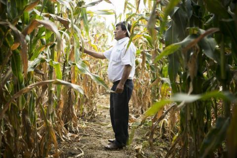 Defensa del maíz nativo, una lucha en solitario