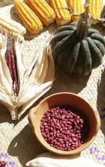 Campesinos y productores respaldan conservación de semillas nativas de Oaxaca