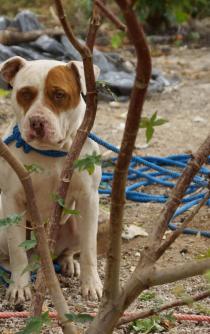 Mata perro a bebé y lo encarcelan