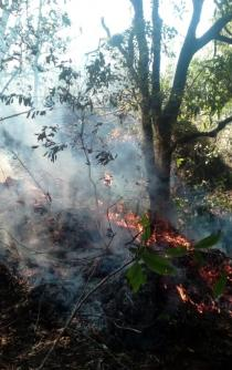 Se mantienen 11 incendios forestales activos en territorio oaxaqueño