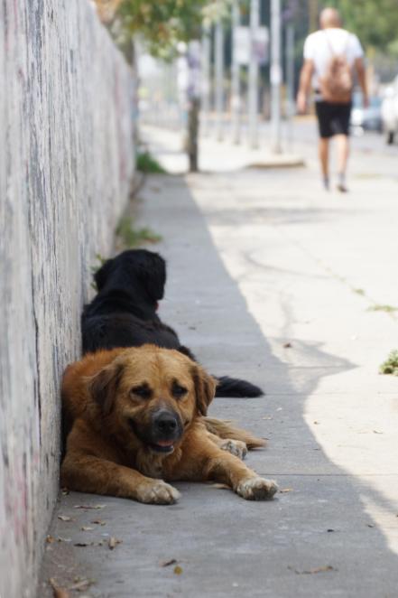 Estiman hasta 100 mil perros y gatos sin hogar en calles de la capital de  Oaxaca